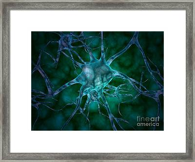 Microscopic View Of Multiple Nerve Framed Print by Stocktrek Images
