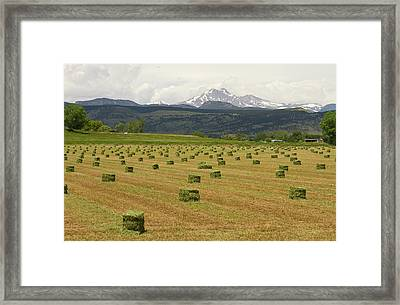 Mid June Colorado Hay  And The Twin Peaks Longs And Meeker Framed Print by James BO  Insogna