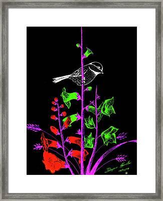 Mid Night Feed Framed Print by Dwayne Hamilton