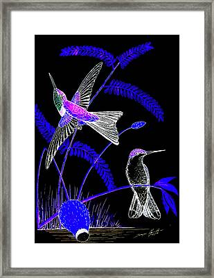 Mid-night Humming Bird Framed Print by Dwayne Hamilton