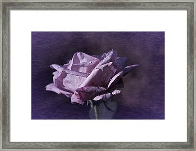 Framed Print featuring the photograph Mid September Purple Rose by Richard Cummings