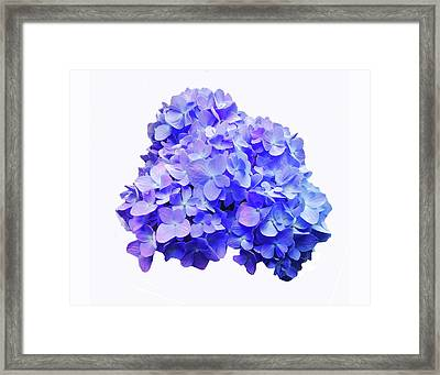 Framed Print featuring the photograph Mid-summer Blue by Roger Bester