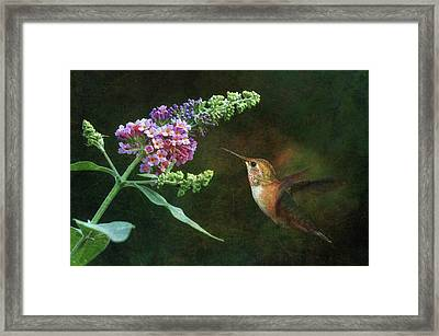 Mid-summer Delight 2 Framed Print