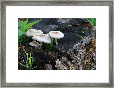Mid Summers Fungi Framed Print