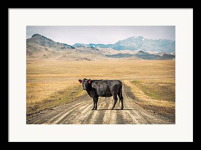 One Cow Framed Prints