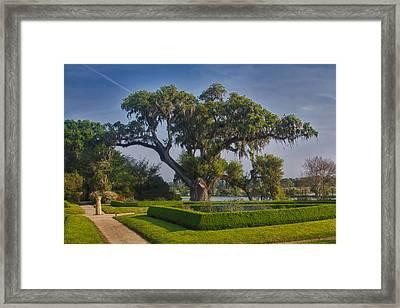 Middleton Oak Framed Print