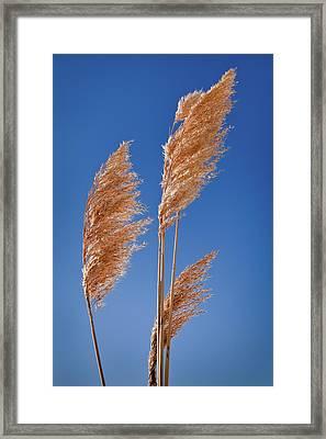 Midewin National Tallgrass Prairie Framed Print