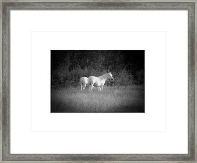 Midi White Horses. Framed Print by Antonio Costa