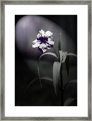 Midnight Bloom Framed Print
