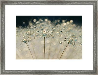 Midnight Blue Dandy Sparkle Framed Print by Sharon Johnstone