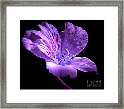 Midnight Calm Framed Print by Krissy Katsimbras