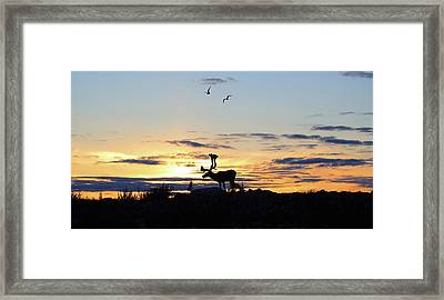 Midnight Caribou Sunset Framed Print by Nick Laferriere