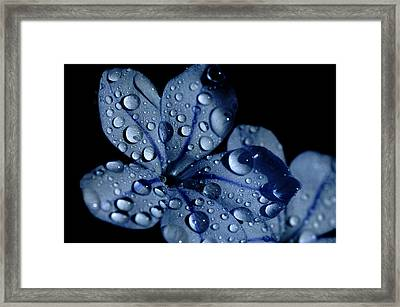 Midnight Dew Framed Print