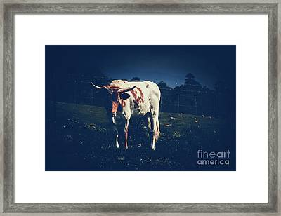 Framed Print featuring the photograph Midnight Encounter by Sharon Mau