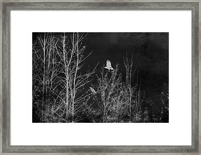 Midnight Flight Silhouette Bw Framed Print