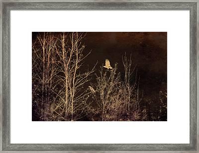 Midnight Flight Silhouette Framed Print