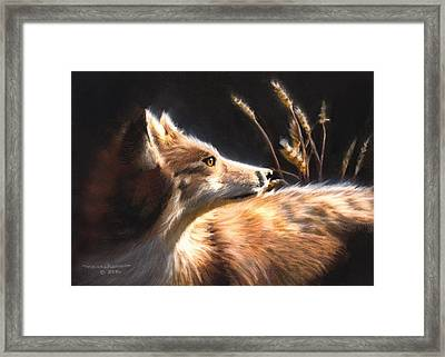 Midnight Fox Framed Print