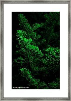 Midnight Green Framed Print by Niel Morley