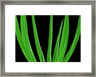 Midnight Palm Framed Print by Slade Roberts