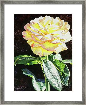Midnight Rose Framed Print by David Lloyd Glover