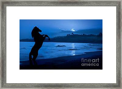 Midnight Stallion Framed Print by Patty Hallman