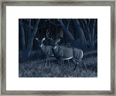 Midnight Stroll - Whitetail Deer At Night Framed Print by Crista Forest