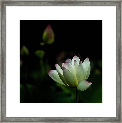 Midnight White Framed Print by Tameko Cox
