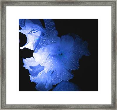 Midnite Aroma Blue Framed Print by Debbie May