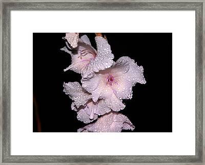 Midnite Aroma Purple Framed Print by Debbie May