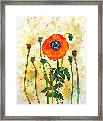 Midsummer Poppy Framed Print by Moon Stumpp