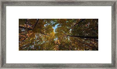 Midwest Forest Canopy Framed Print by Steve Gadomski