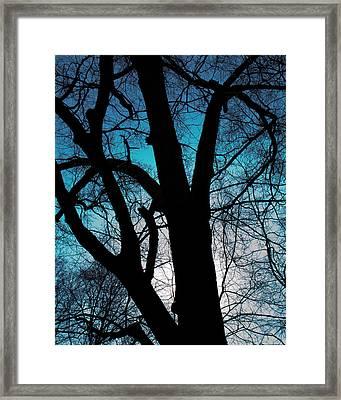 Might Oak 16x20 Framed Print