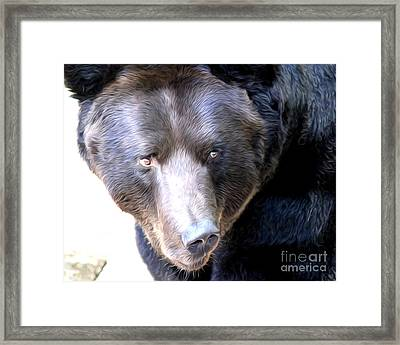 Framed Print featuring the photograph Mighty Black Bear by Anne Raczkowski