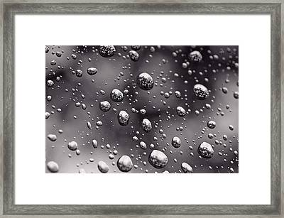 Mighty Oak Framed Print