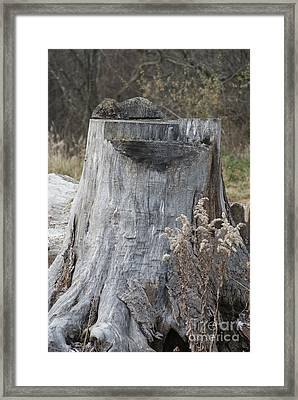 Mighty Stump Framed Print by Rob Luzier