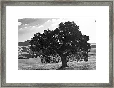 Mighty The Oak Framed Print