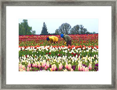 Migrant Workers In The Tulip Fields Framed Print by Margaret Hood
