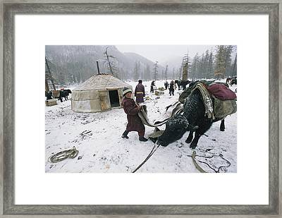 Migration Day Ride Done, 13- Year-old Framed Print by Gordon Wiltsie