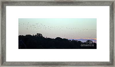 Migration Flyway Framed Print