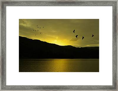Migration Framed Print by Martin Newman