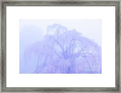 Framed Print featuring the photograph Miharu Takizakura Weeping Cherry01 by Tatsuya Atarashi