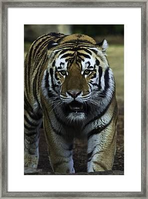 Mike Framed Print