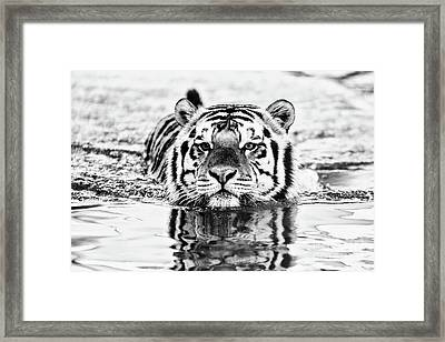 Mike Framed Print by Scott Pellegrin