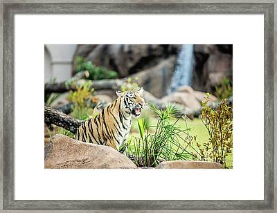 Mike Vii Ready For The Season Framed Print