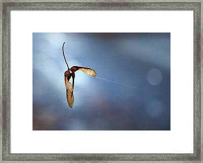 Miksang 3 Maple Seeds Framed Print by Theresa Tahara