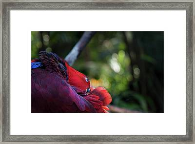 Miksang 4 Parrot Framed Print by Theresa Tahara