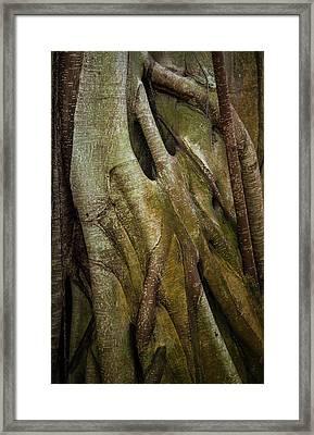 Framed Print featuring the photograph Miksang 8 Strangler by Theresa Tahara