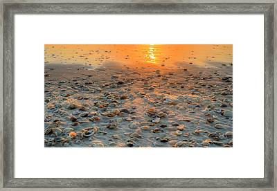 Miles Of Shells In Saint Joe State Park Framed Print by JC Findley