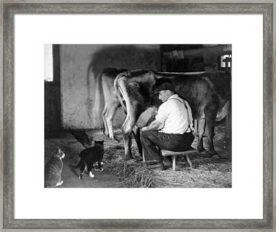 Milking Time On The Farm Framed Print by Underwood Archives