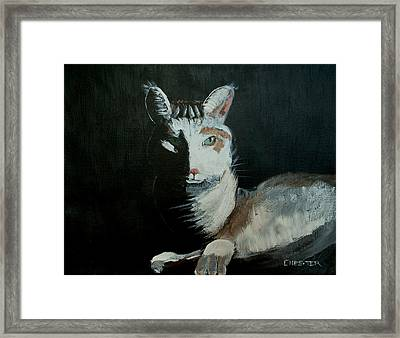 Milkshake The Cat Framed Print